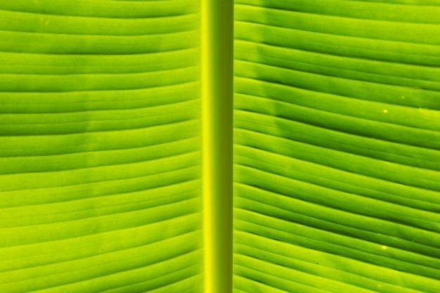 バナナの葉のテクスチャ、緑の葉の背景のクローズアップ