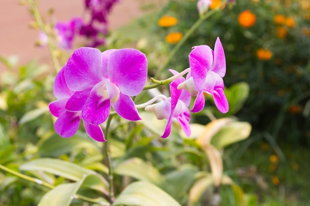 Красивый фиолетовый цветок орхидеи