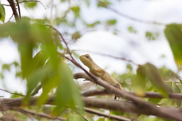 自然の生息地の木の上に座ってオレンジ色のトカゲ