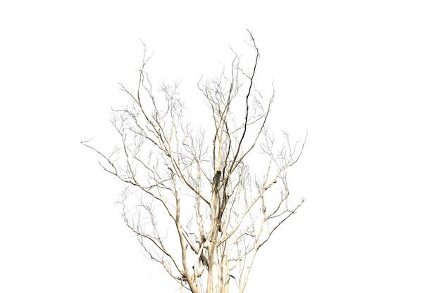 乾燥した木
