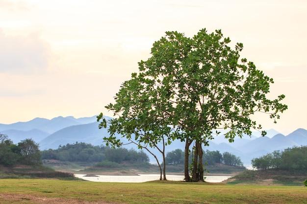 背景に緑の木