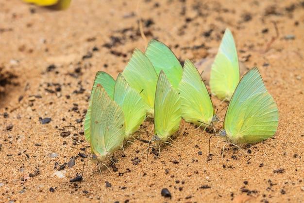Прекрасная бабочка