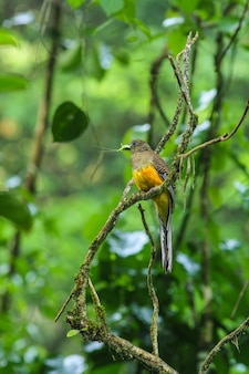 自然界の鳥