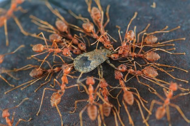 Отряд муравьев пытается переместить мертвого насекомого