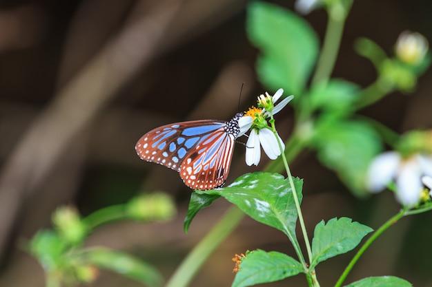 Красивая бабочка в лесу