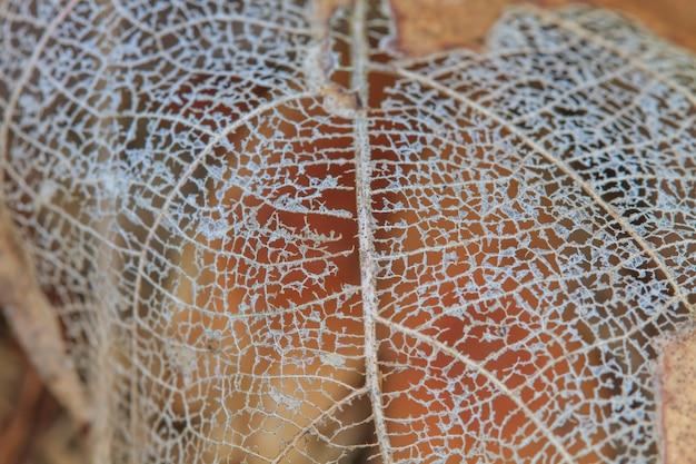 腐った葉と繊維のテクスチャ