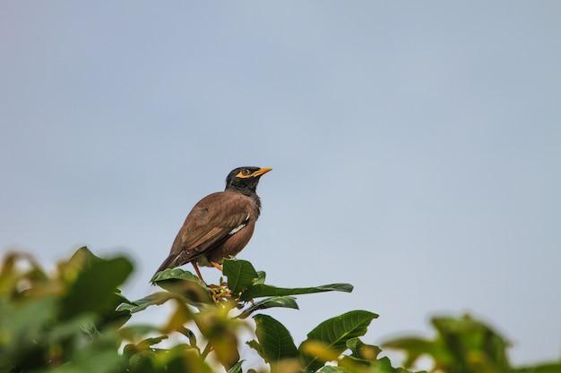 木に羽ばたく一般的なミナの鳥