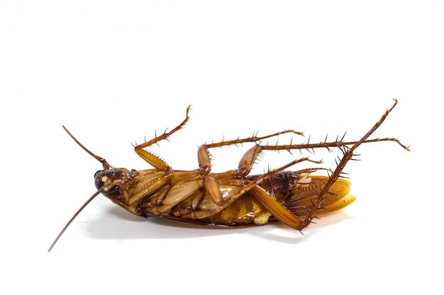 白い背景の上の死んだゴキブリを閉じる