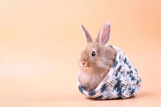 Милый маленький кролик прячется в вязаной шапке.