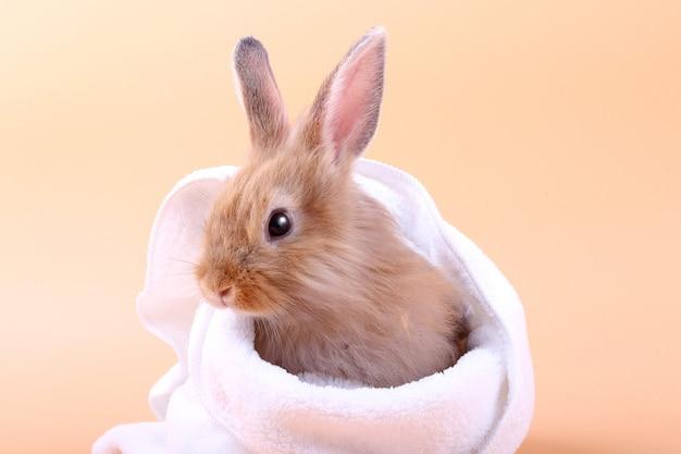 Милый маленький кролик белое тканевое одеяло