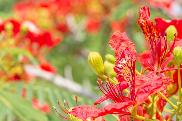 赤とオレンジの花