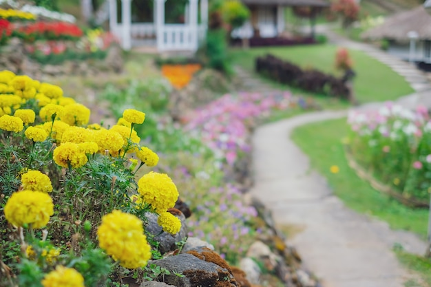 Крупным планом цветы календулы, цветущие в саду