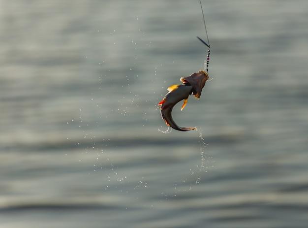 フックに魚