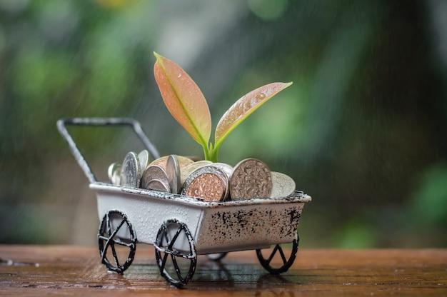 雨の日に、ビジネスコンセプトの手押し車でコインを節約することで成長している植物