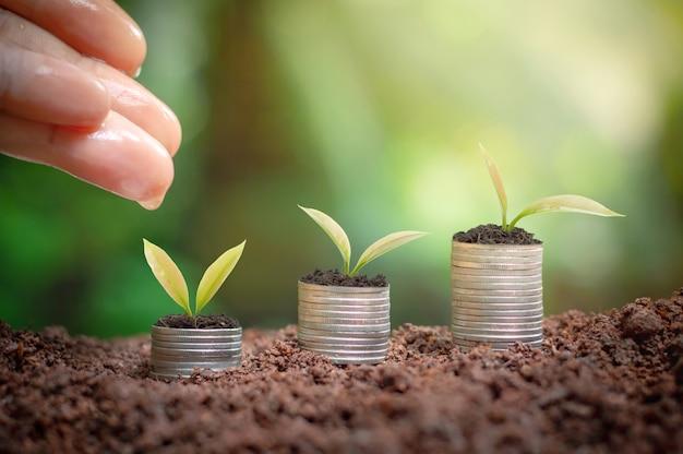 Крупным планом руки женщины лелея и полива молодых растений растет на стопку монет