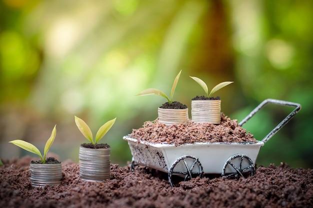 若い植物は、ビジネス投資または節約の概念のためのコインのスタックで育っています