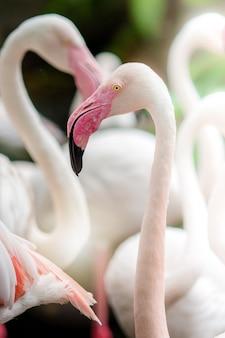 ピンクのフラミンゴクローズアップ、それは羽の美しい着色を持っています