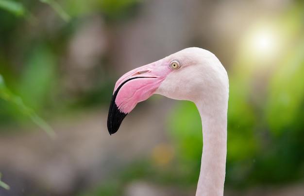 ピンクのフラミンゴが間近で、美しい羽の色があり、
