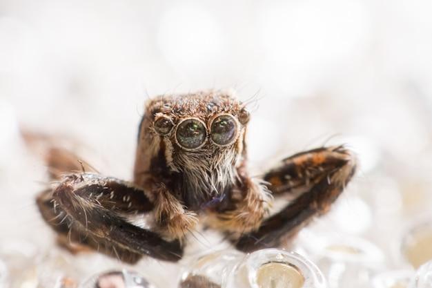 Паук на льду, довольно крутой прыжок паука из макро фотографии с размытым белым фоном