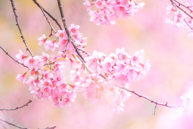 ソフトフォーカスで春の桜