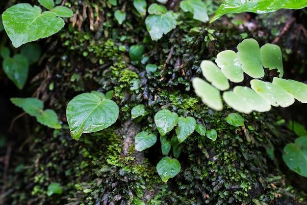 水の熱帯雨林地域で緑の自然苔の木シダ自然公園で落ちる