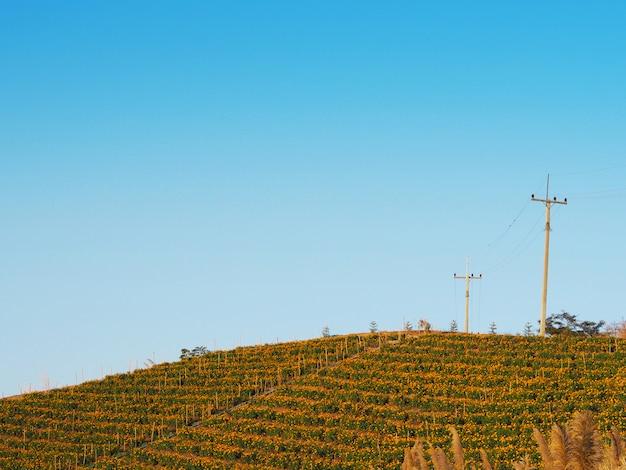 青い空を背景に山のマリーゴールドの花ファーム