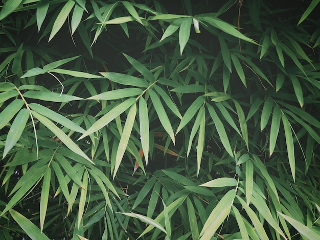 熱帯雨林で新鮮な緑の竹の葉。