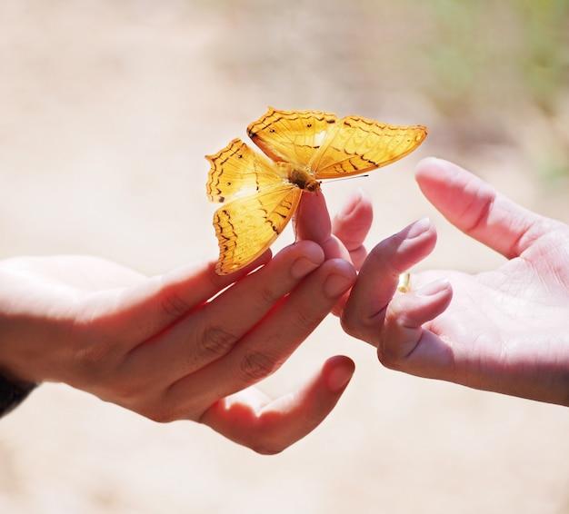 女性の指に美しい蝶を閉じる