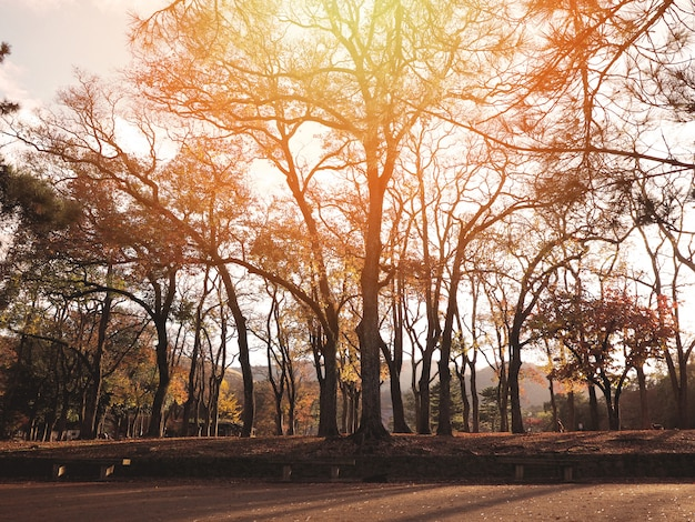 秋の森のシルエットの木
