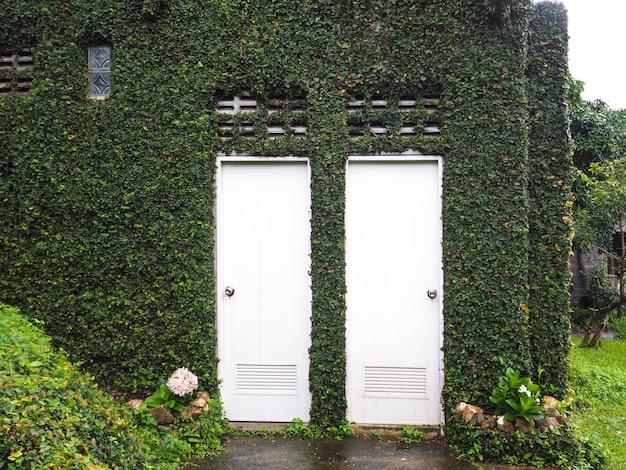 雨季には緑のつる植物と白いドアで覆われた家の壁