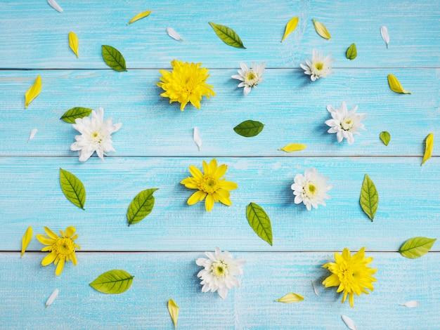 Закройте вверх по белым и желтым цветкам хризантемы на голубой древесине.