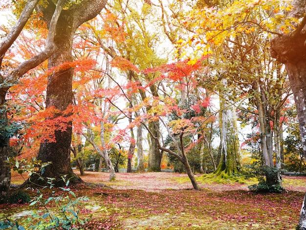 秋の公園で地面に落ちているカエデの木と葉。