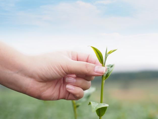 女の子、手、葉、緑、葉、葉