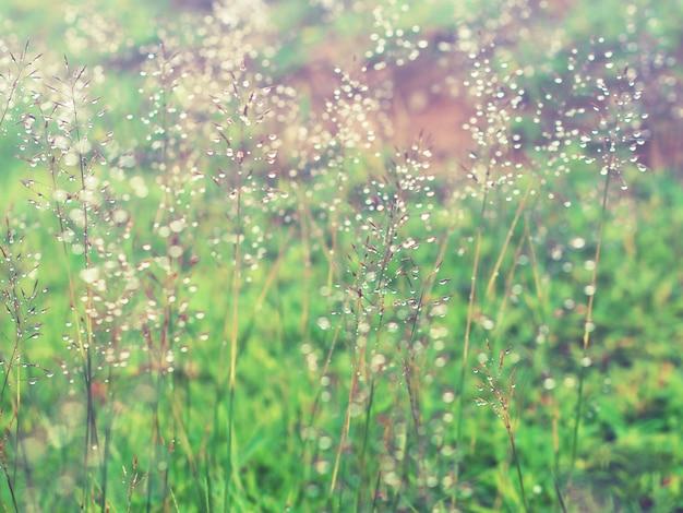 Травяной луг с каплями воды после дождя