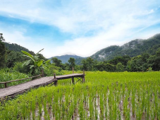 田んぼの木製の経路