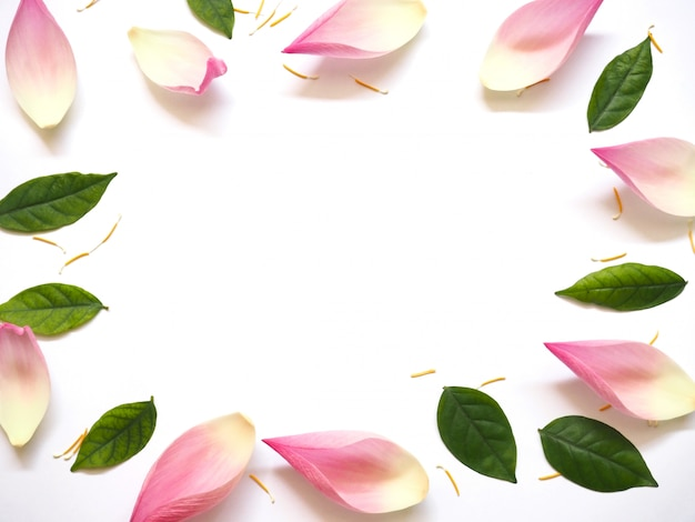 白い背景の上の緑の葉と黄色の花粉と蓮の花びらのトップビュー
