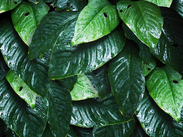自然な背景の水滴と緑の葉。