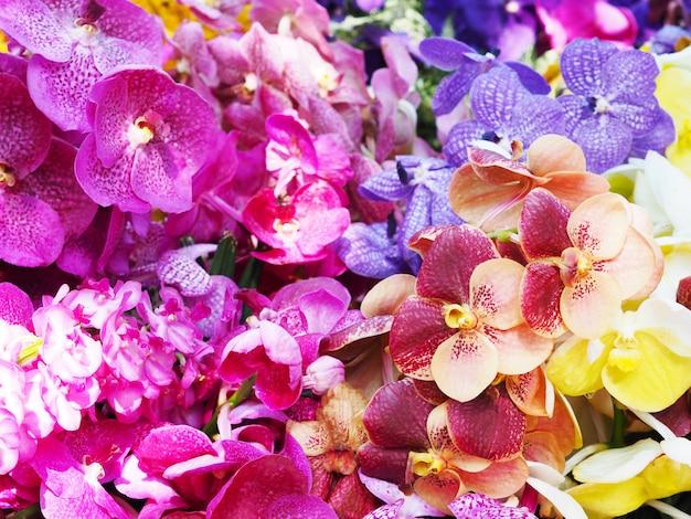 カラフルなバンダ蘭の花の花束