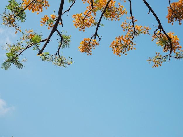 オレンジ色の孔雀の花