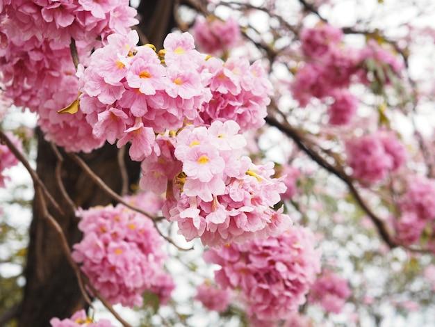 春や夏のピンクのトランペットの花。