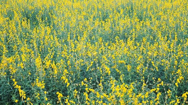 Желтое поле цветков для весны или предпосылки лета.