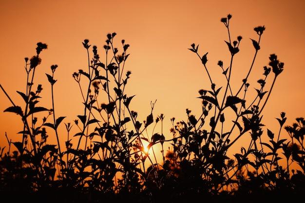 Силуэт травы с солнцем вечером. концепция естественной красоты