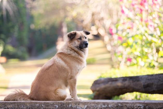 裏庭の庭に座っているかわいい犬
