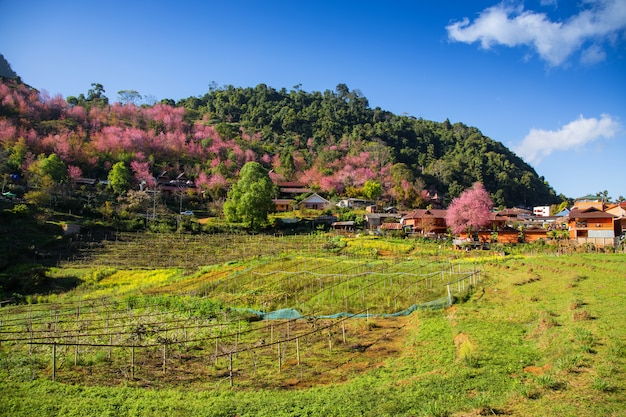 Красивый пейзаж с деревней в долине, сельскохозяйственные угодья и фон голубого неба в таиланде