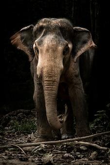 Милый ребенок слоненок в этом портретном изображении в канчанабури, таиланд