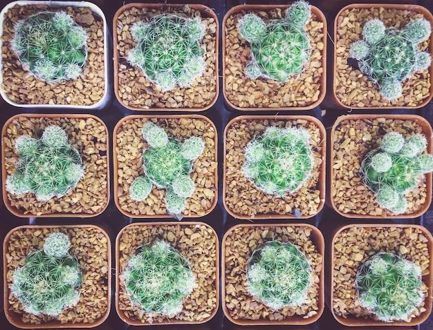 ポットコレクショントップビューでサボテンと多肉植物のサボテンの植物