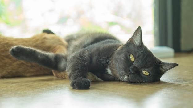 黒い猫は窓の近くに横たわっています。