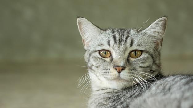 Крупным планом лицо серого полосатого кота.