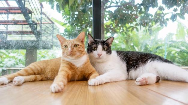 赤猫と黒と白の猫が部屋で横になっています。