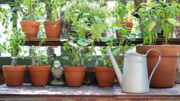 じょうろと木製のテーブルの上の植木鉢の植物。